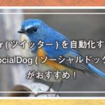 Twitter(ツイッター)を自動化するなら『SocialDog(ソーシャルドッグ)』がおすすめ!